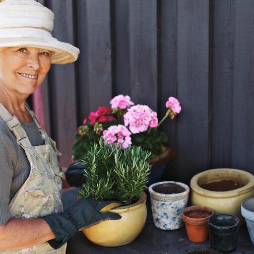 Active senior woman potting some plants after preparing to garden as a senior.