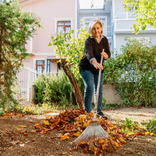 Senior woman raking leaves in her lawn as an item of her lawn care checklist