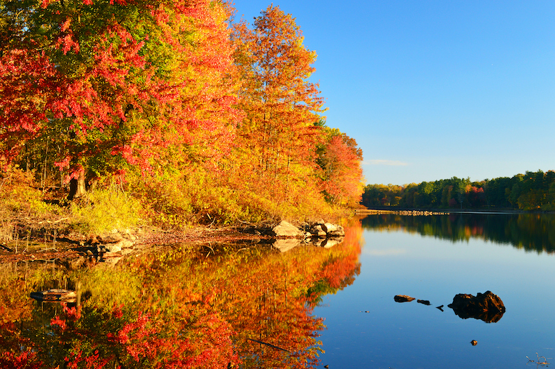 Beautiful fall foliage in St. Louis over a body of water